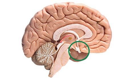 Ausfall der Hypophyse - Symptome, Diagnose und Behandlung - Ursachen ...